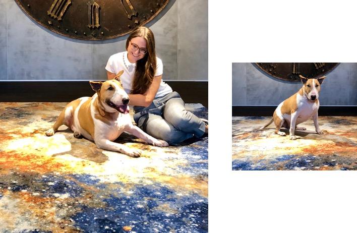Teppich-Jordan-und-Haustiere1nUDH2jGpvRaeqVNWKZKkxuTpN